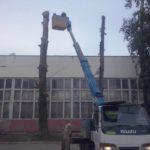 Спил деревьев савтовышки